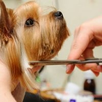 bringing-your-dog-into-the-groomer-will-get-him-ready-for-the-high-temperatures-of-summer-_16000836_800767173_1_0_14040805_500