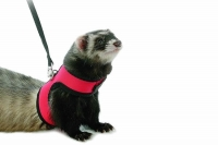 marshal-neoprene-ferret-harness_enl-500x500